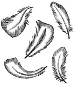 Feather Set — Stock Vector