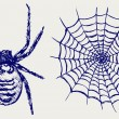 Spider and cobweb — Stock Photo
