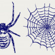 Stock Photo: Spider and cobweb