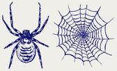 Spider and cobweb — Stock Photo