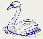 Swan sketch — Stock Photo