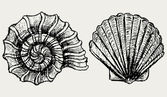 Sea snail and scallop shell — Stock Photo