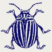 Lieveheersbeestje schets — Stockfoto