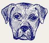 Portrait puppy — Stock Photo