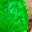 TEXTURE OF A GREEN LEAF — Stock Photo #12157648