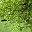 Green tree in the park — Stock Photo