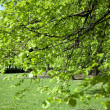 Green tree in the park — Foto de Stock