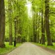 Alley in green park — Stock Photo