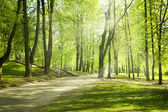 Green park in sunny morning — Foto Stock