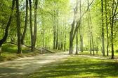 Parque verde na manhã ensolarada — Fotografia Stock