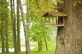 緑豊かな公園、木に餌ラック — ストック写真