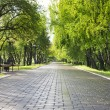 Alley in green park. — Stock Photo