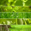Collage nature green background. — Stock Photo #11539280