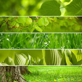 Collage nature vert fond. — Photo