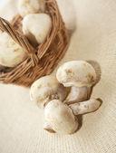 Mantar champignon — Stok fotoğraf