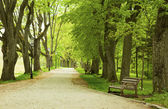 Bench in the spring park — Stock Photo