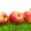 Red Apples on Grass — Stock Photo #10944041