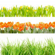 Flowers and Grass — Stockfoto #11362967