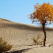 Landscape of desert — Stock Photo