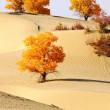 Landscape of desert — Foto Stock