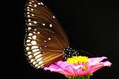 Butterfly zittend op een roze bloem — Stockfoto