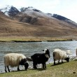 Landscape in the highland of Tibet — Stockfoto