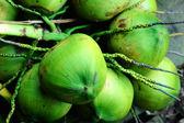 Fresh coconut fruits — Stock Photo