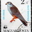 HUNGARY - CIRCA 1983: A Stamp printed in Hungary shows image of — Stock Photo