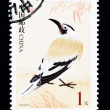CHINA - CIRCA 2002: A Stamp printed in China shows image of a wild bird, circa 2002 — Stock Photo