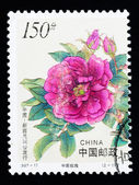 CHINA - CIRCA 1997: A Stamp printed in China shows Chinese rose flowers, circa 1997 — Stock Photo