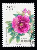 China - ca. 1997: eine Briefmarke gedruckt in China zeigt chinesische rose Blumen, ca. 1997 — Stockfoto