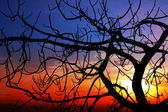 Fig at sunset — Stock Photo