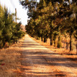 Pine Tree Lane Gravel Road — Stock Photo