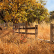 Stock Photo: Old Wooden Farm Fence