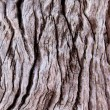 Stock Photo: Tree Trunk Background