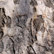 Tree Trunk Background — Foto Stock
