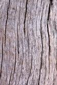 Tree Trunk Background — Stock Photo