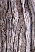 Tree Trunk Background — Stock Photo