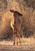 Young Female Njala Standing in Winter Sunset Sun — Stock Photo
