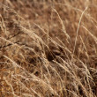 Stock Photo: Bushveld Grass