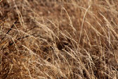 Bushveld Grass — Stock Photo