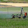 Stock Photo: Machine watering field