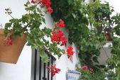 Kwiaty doniczkowe — Zdjęcie stockowe