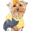 Stock Vector: Vector pedigreed dog Yorkshire terrier sitting
