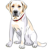 Vector sketch yellow dog breed Labrador Retriever sitting — Stock Vector