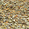 Bee pollen — Stock Photo