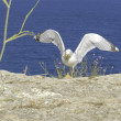 Seagull at Formentera - Stock Photo