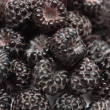 Blackberries — Stock Photo #11441430