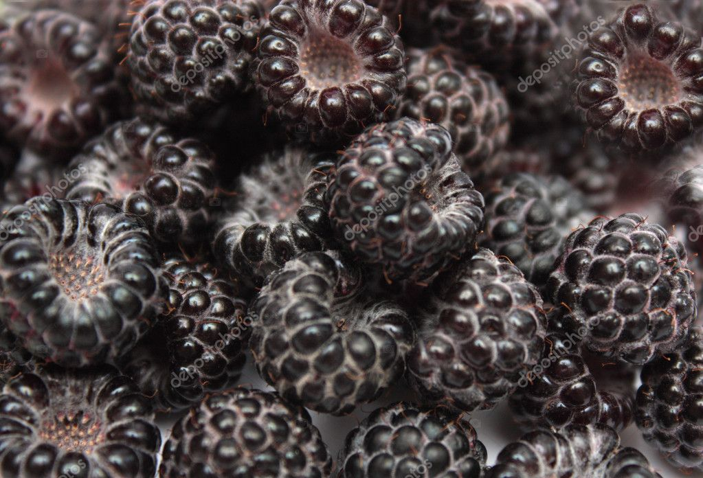 Background of  juicy fresh blackberries  . — Stock Photo #11441430