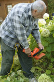 Elderly gardener — Stock Photo